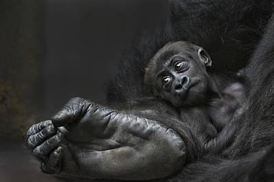 Monkey Photograph - Bigfoots Baby by Joachim G Pinkawa