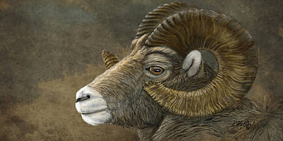 Painting - Bighorn by Kathie Miller