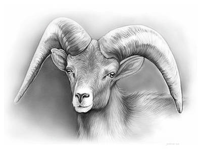 Animals Drawings - Bighorn Ram by Greg Joens