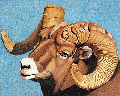 Drawing - Bighorn Sheep Portrait by Dan Miller