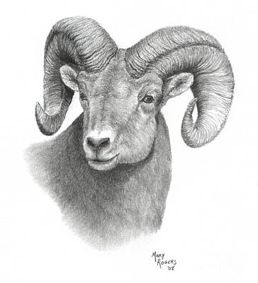 Drawing - Bighorn Sheep by Mary Rogers