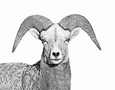 Art Print featuring the photograph Bighorn Sheep Ram Black And White by Jennie Marie Schell