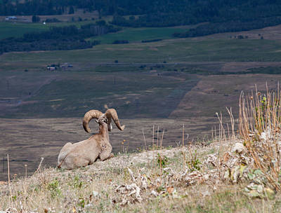 Photograph - Bighorn View by Fran Riley