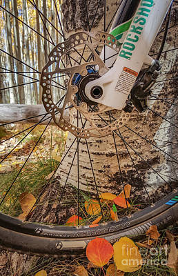 Photograph - Bike And Aspen Leaves by Marianne Jensen