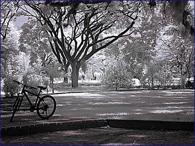 Typographic World Royalty Free Images - Bike At The Botanical Garden Royalty-Free Image by Galeria Trompiz