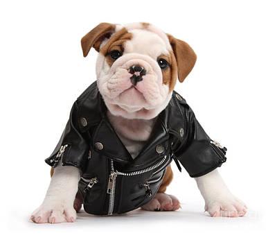 Photograph - Biker Bulldog by Warren Photographic