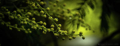 Photograph - Bilbao Spain Tree Blossoms. by Henri Irizarri
