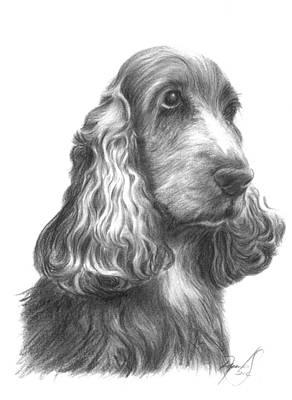 Cocker Spaniel Drawing - Bilbo Cocker by Renata Clare