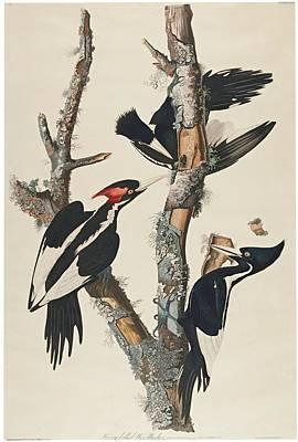 Billed Woodpecker Art Print by MotionAge Designs