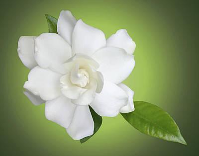 Gardenia Photograph - Billie's Flower by Kristin Elmquist