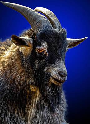 Billy Goat Blues Art Print by Brian Stevens
