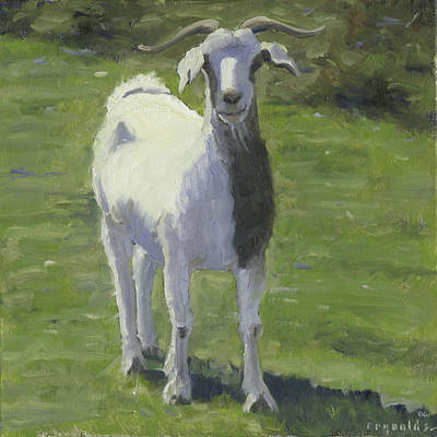 Billy Goat Art Print by John Reynolds