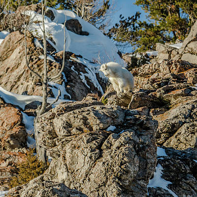 Photograph - Billy The Kid On Alpine Cliffs by Yeates Photography