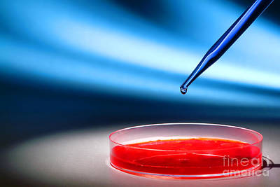 Red Photograph - Biotechnology Experiment In Science Research Lab by Science Research Lab By Olivier Le Queinec