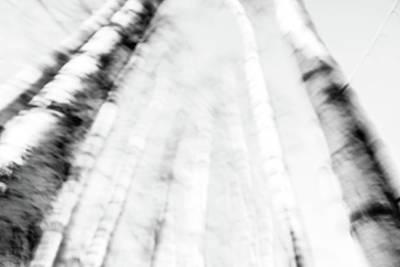 Digital Art - Birc by Tommytechno Sweden