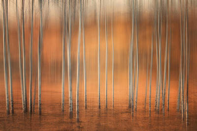 Birch Abstract Art Print by Naman Imagery