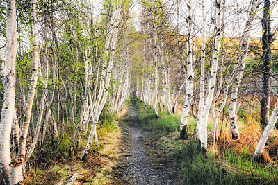 Photograph - Birch Alley II by Robert Clifford