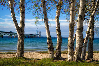 Photograph - Birch At The Mac by Richard Gregurich