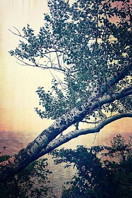 Photograph - Birch At The Overlook 2.0 by Michelle Calkins