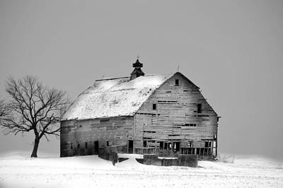 Photograph - Birch Avenue Barn Bw by Bonfire Photography