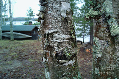 Photograph - Birch Bark 3 by Jacqueline Athmann