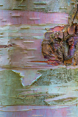 Photograph - Birch Bark Abstract by Patti Deters