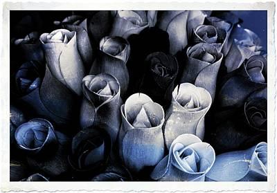 Birch Bark Roses 3 Art Print by Cindy Nunn