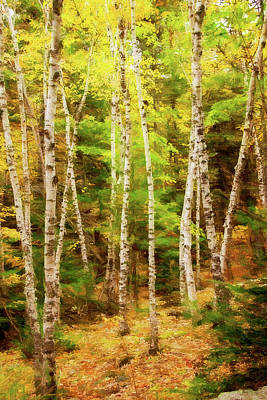 Autumn Landscape Mixed Media - Birch Beauty by Terry Davis