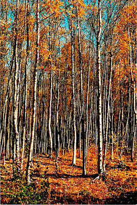 Birch Art Print by Brigid Nelson