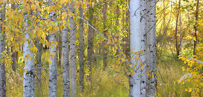 Birch Forest Art Print by Bonnie Bruno