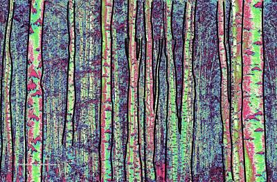 Digital Art - Birch Forest by Michael Chatman