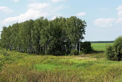 Nuture Photograph - Birch Grove by Sergei Dolgov