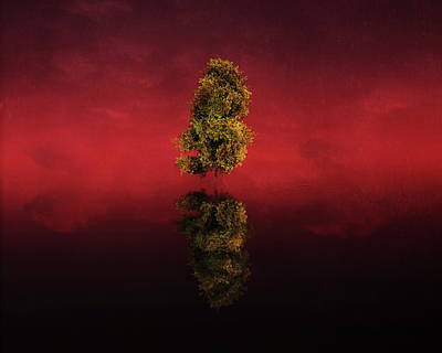 Birch Digital Art - Birch In A Red Landscape by Jan Keteleer