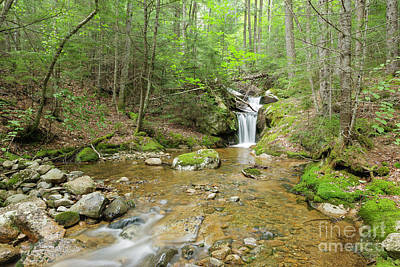 Photograph - Birch Island Brook - Lincoln, New Hampshire  by Erin Paul Donovan
