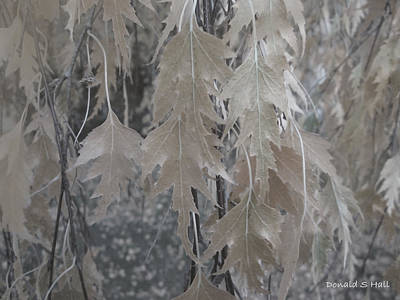 Digital Art - Birch Leaves In Beige by Donald S Hall