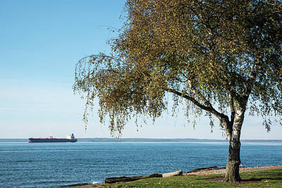 Photograph - Birch On Bellingham Bay by Tom Cochran