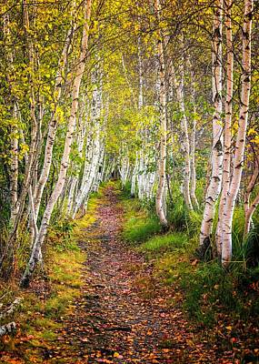 Photograph - Birch Path - Acadia National Park by Kim Carpentier