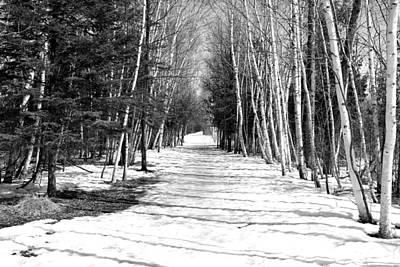 Birch Path Art Print