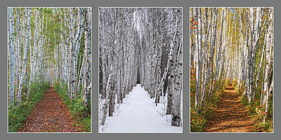 Photograph - Birch Path Three Season Collage by Chris Whiton