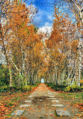 Birch Pathway Art Print by Kristin Elmquist