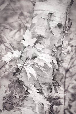 Photograph - Birch Peel by Leda Robertson