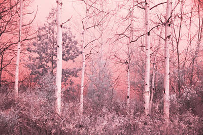 Photograph - Birch Posted by Emily Stauring