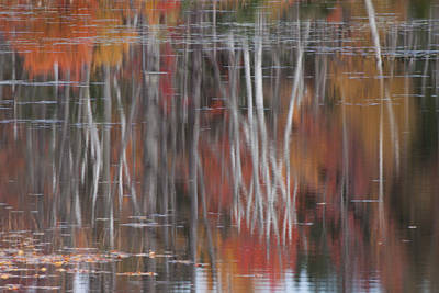 Fall Colors Photograph - Birch Reflection In Pondicherry by Jeff Folger