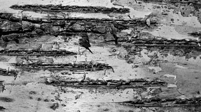 Photograph - Birch Textures 52 Bw by Mary Bedy