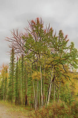 Photograph - Birch Tree #1 by Patricia Dennis