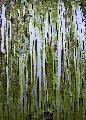 Photograph - Birch Tree Abstract by Stuart Litoff
