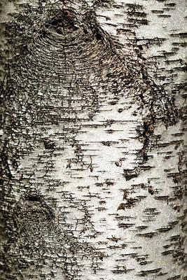 Art Print featuring the photograph Birch Tree Bark by Christina Rollo