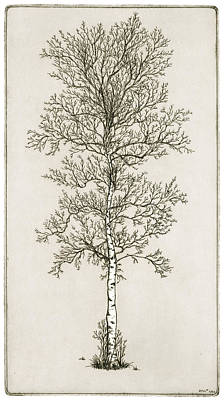 Drawing - Birch Tree by Charles Harden