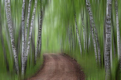 Photograph - Birch Tree Forest #6 by Patti Deters