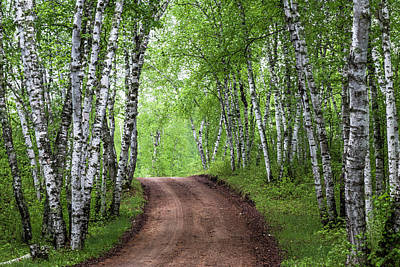 Photograph - Birch Tree Forest Path #3 by Patti Deters